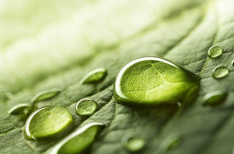 szobanövények otthoni vízigénye