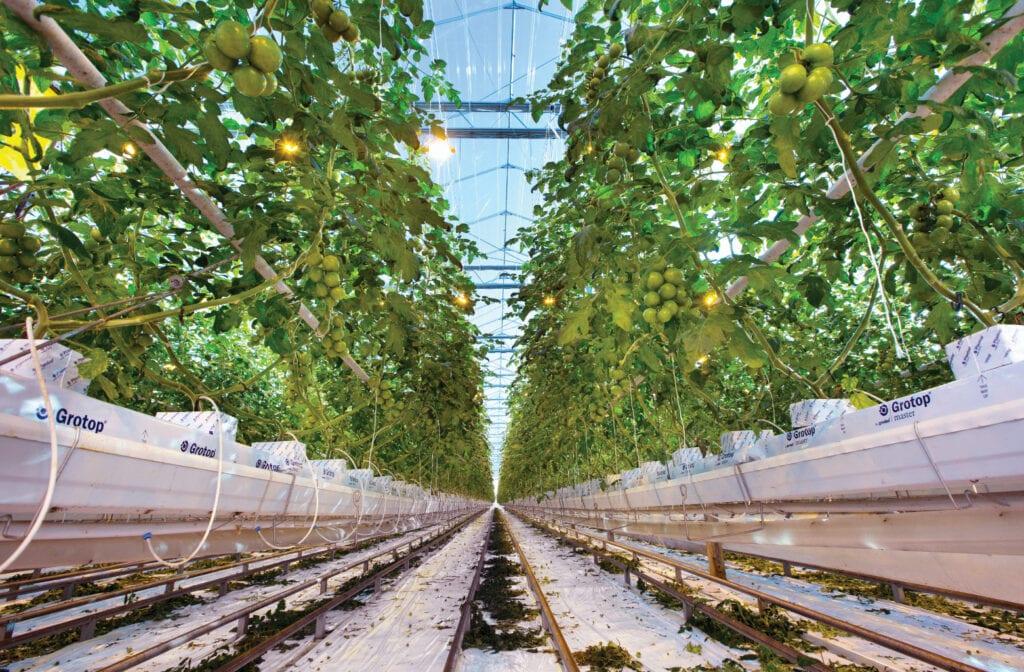 A tápfolyadékon alapuló növénytermesztés a jövő módszere lehet